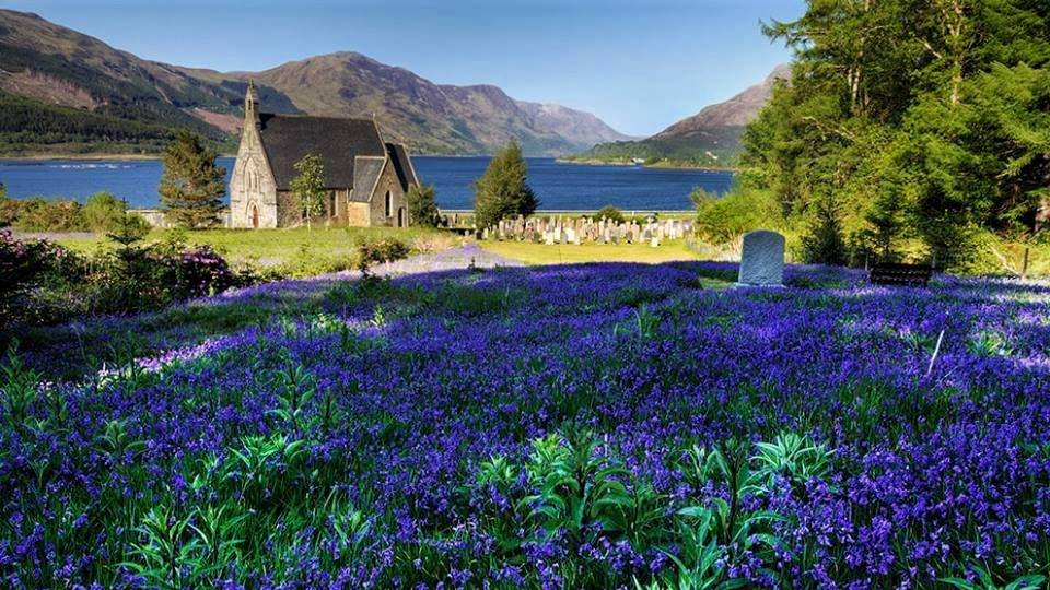 Bluebells in Glencoe