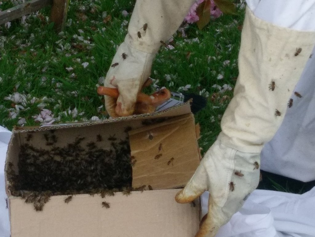 bee keeping in Scotland