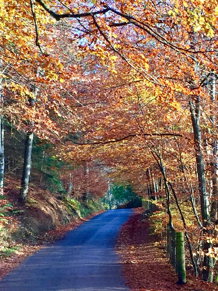 road to Loch Faskally lined with autumn trees in Perthshire Scotland