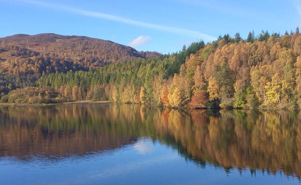Autumn trees in Perthshire