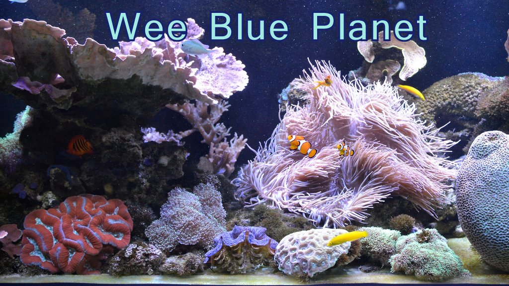 Wee Blue Planet Blog