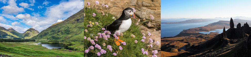 Glen Etive - Puffin - Isle of Skye